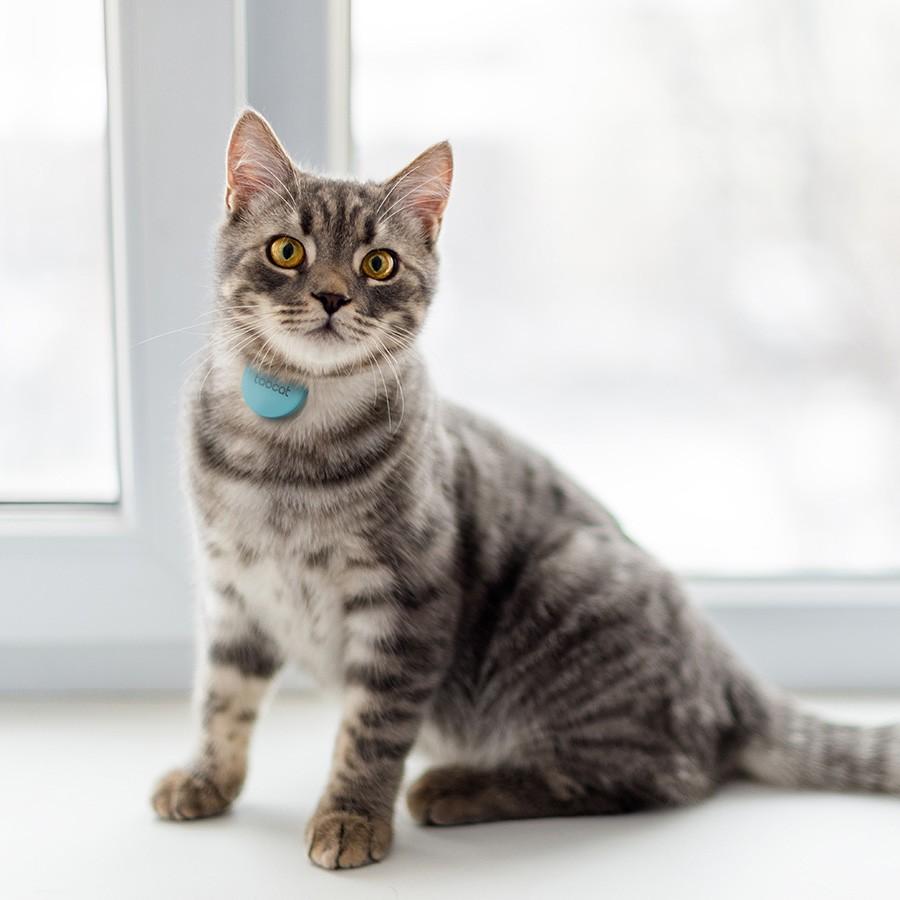 Cat: Tabcat Cat Tracker