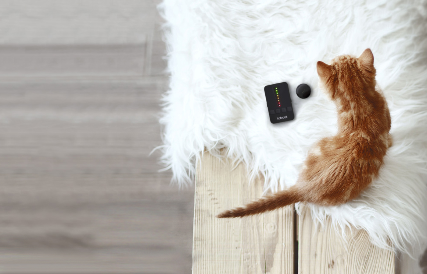 Why Radio Frequency is Better Than GPS Cat Tracker