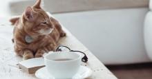 gps-cat-tracker