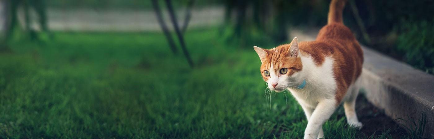 distance-cats-roam