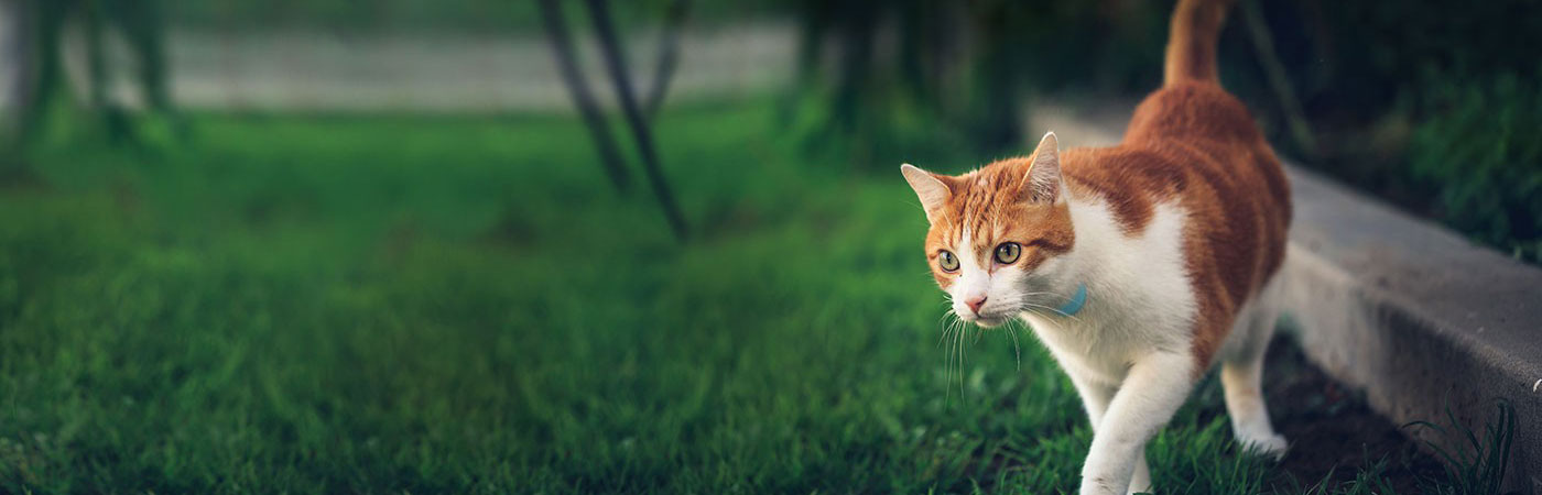 Use Tabcat Cat Tracker to train your cat to come home