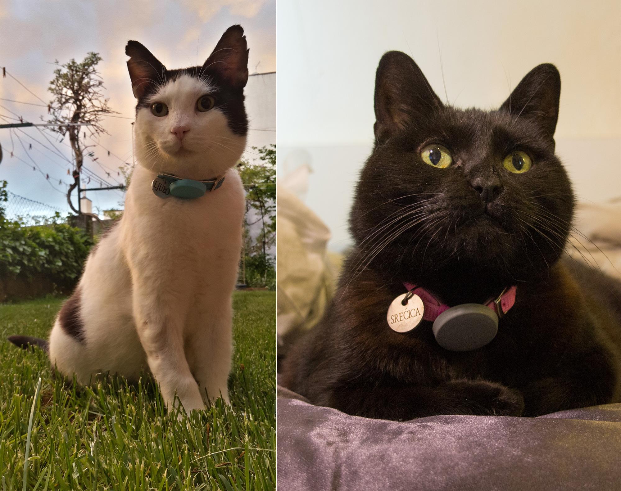 Ljubo and Srecica the cats
