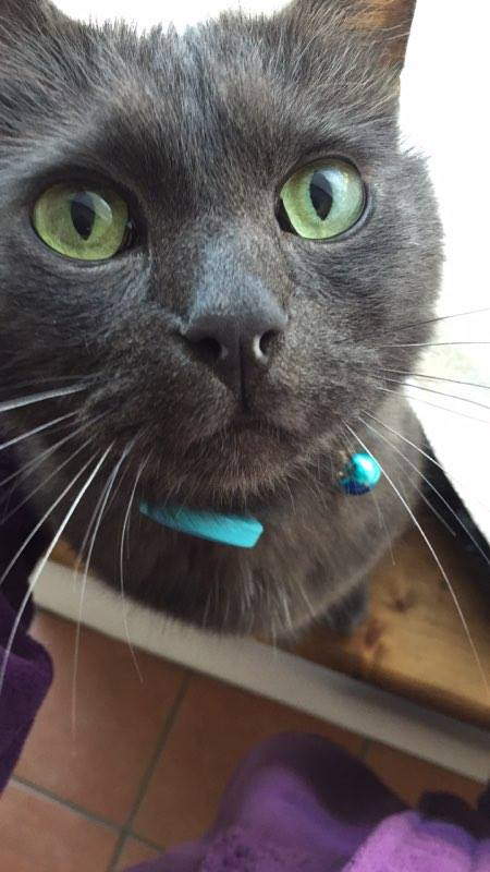 Gus the cat wearing cat tracker