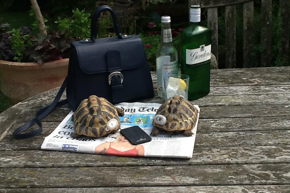 Tortoise tags