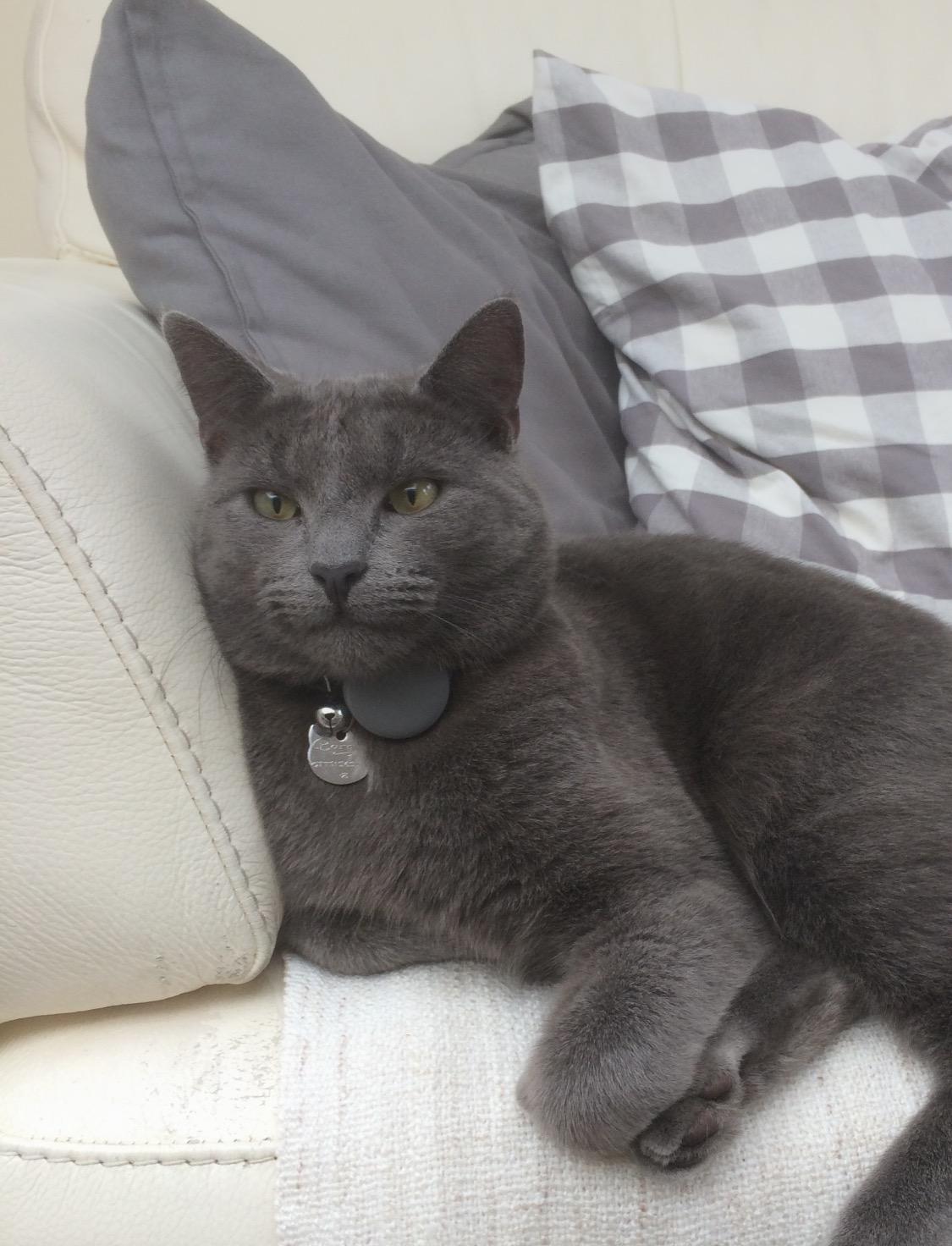 Helen's cat