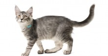 cat-tracker-collar