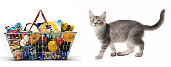 cat and supermarket trolley
