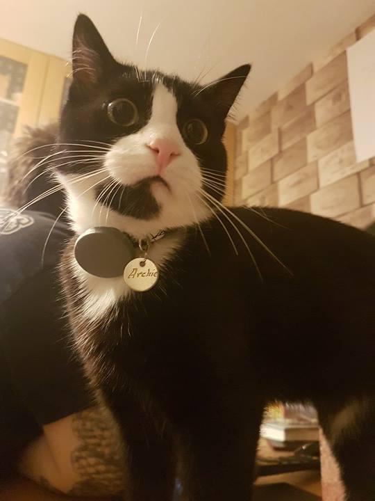 archie customer cat