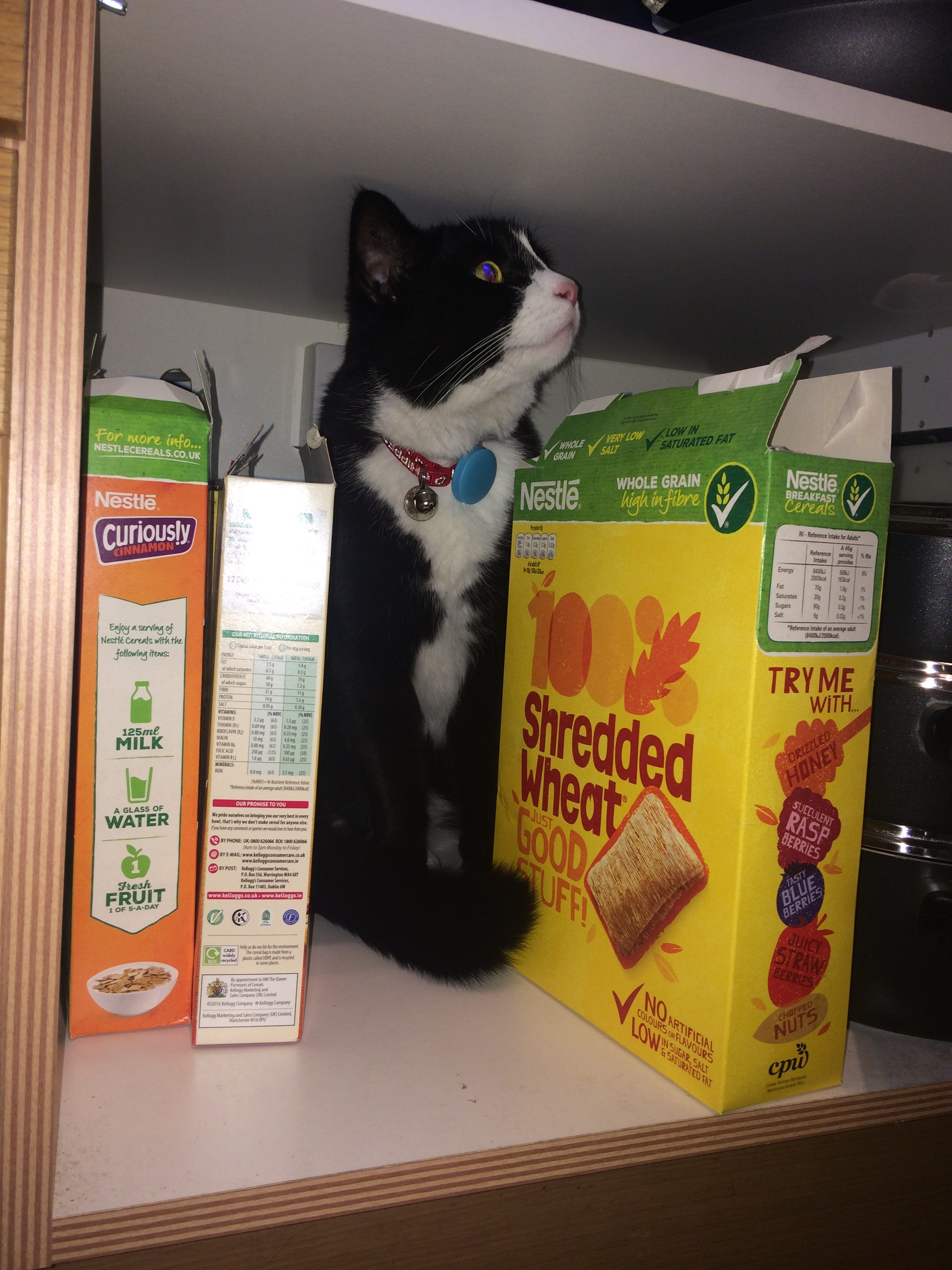 barney in cereal cupboard
