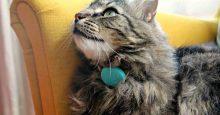 Tabcat Cat Tracker Image
