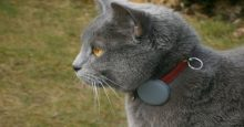 cat collar with tabcat