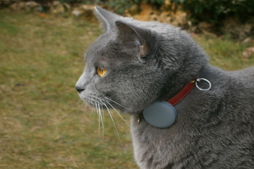 Cat Collar Considerations - What to Look for When Choosing a Collar for Your Cat
